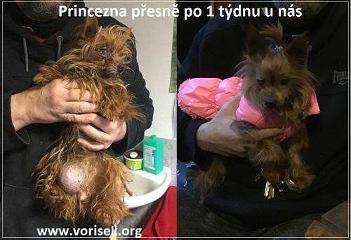 princezna-1tyden-co-knam-prisla-2.jpg